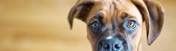 Fredagsfilm: Den skyldige hund